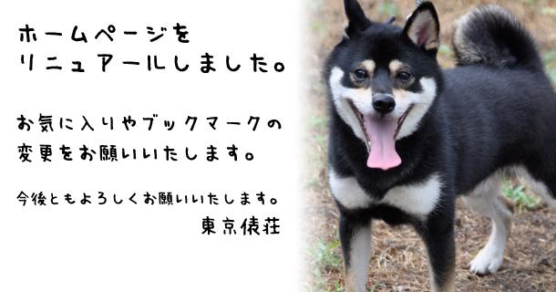 豆柴・極小豆柴ブリーダー 東京俵荘 ホームページをリニュアールしました